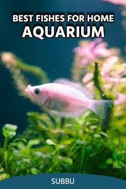 BEST FISHES FOR HOME AQUARIUM by Subbu in English