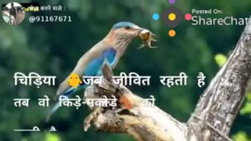 Sondagar Devanshi videos on Matrubharti