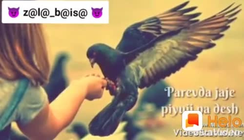 Twinkle Pardip Patel videos on Matrubharti