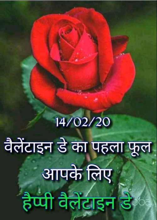 Post by Dhaval Patel on 14-Feb-2020 04:31am