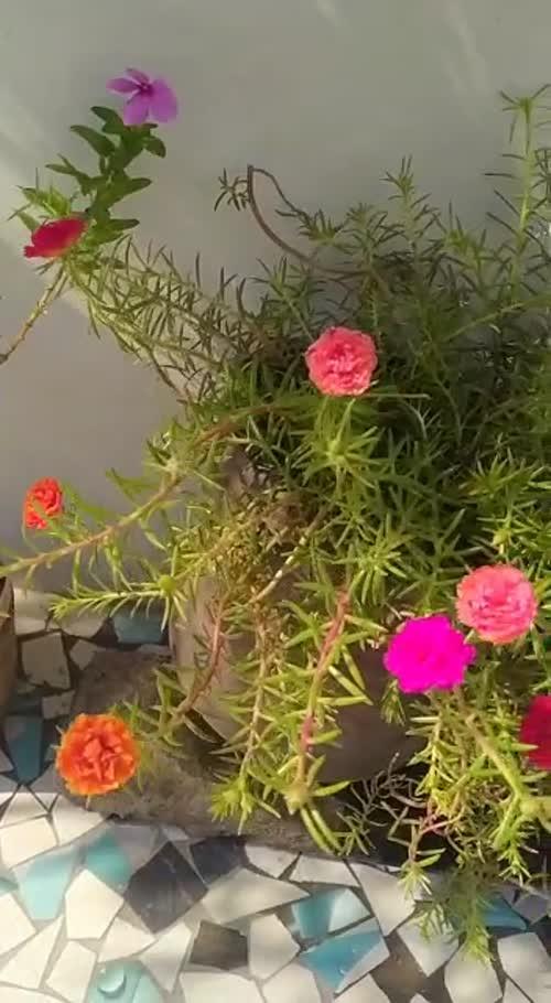 Rutvika Ujeniya videos on Matrubharti