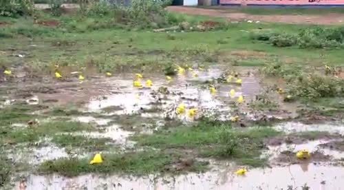 DABHI DILIP videos on Matrubharti