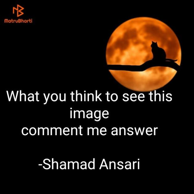 English Questions by Shamad Ansari : 111738235