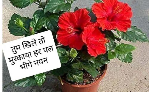 Post by Pranava Bharti on 25-Aug-2021 12:51pm